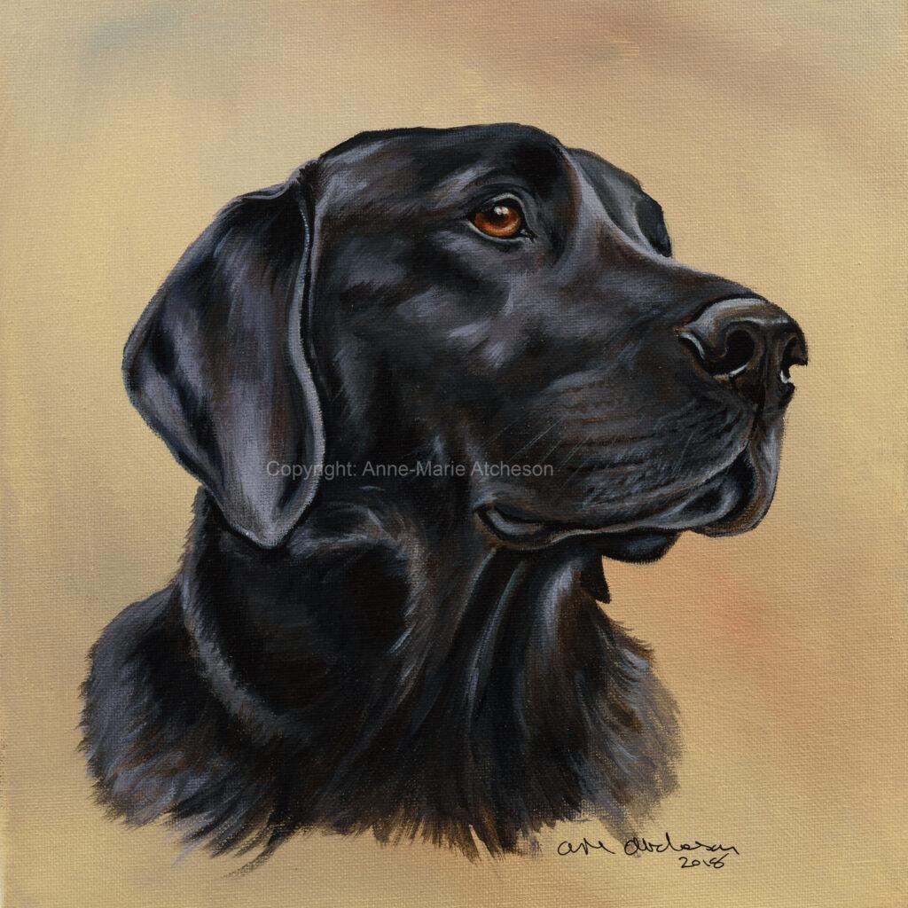Commission Black Labrador