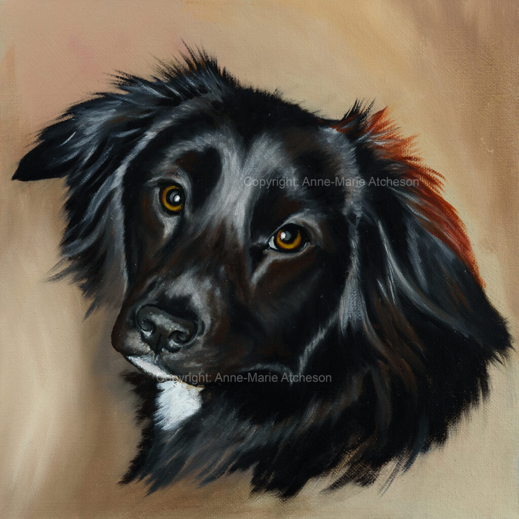 Commission painting of a Collie dog