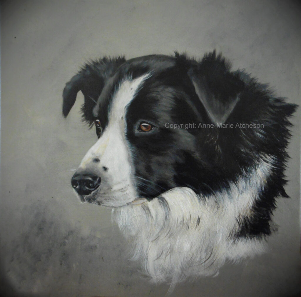 Commission Collie dog