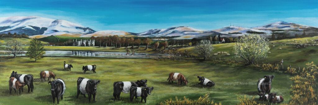 Commission Beltie cows in field