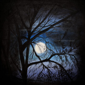 Midnight Moon canvas print