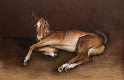 Joey Foal Canvas print