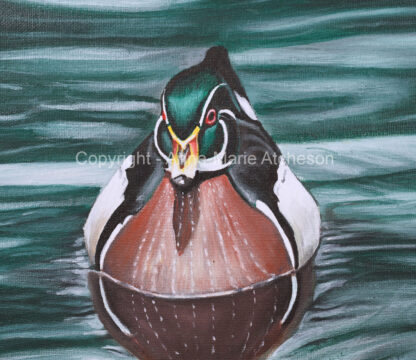 Wood Duck on Sea Print